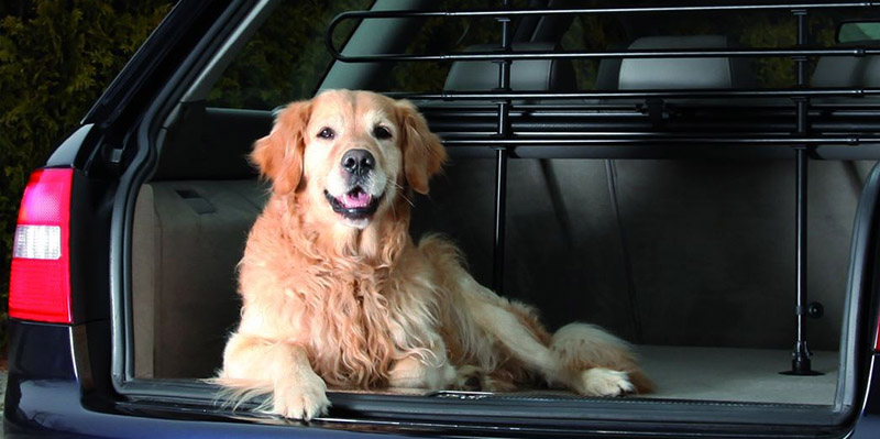 Do you allow pets in the cars?